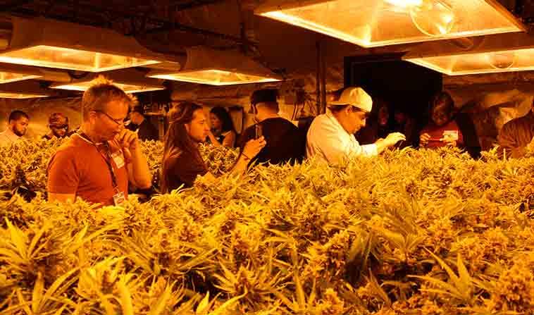 Denver Colorado Marjuana Tours