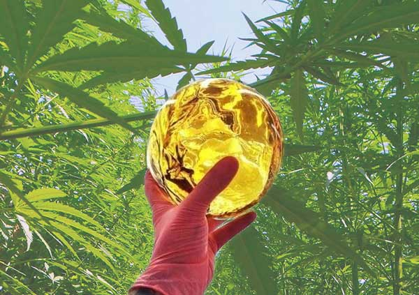 Dragon Ball Marijuana concentrate extract