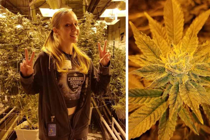 Cannabis Grow Tour from Denver Airport
