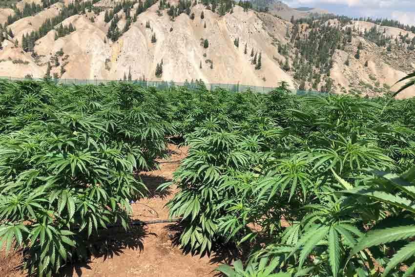 PotZero Marijuana Farm Tour Colorado