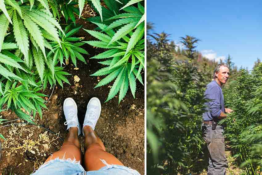 Touch, feel, smoke, learn, and be we with the cannabis plants