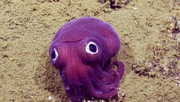 squid2