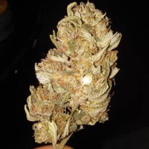 @mustbetheweed-reggie-weed