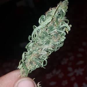 @ragepat420-reggie-bad-weed