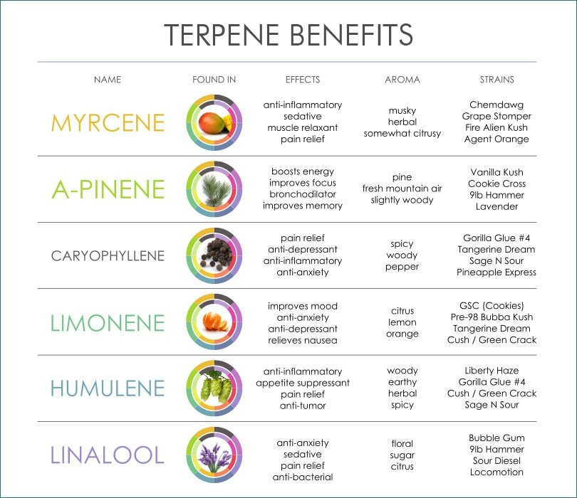 types of terpenes