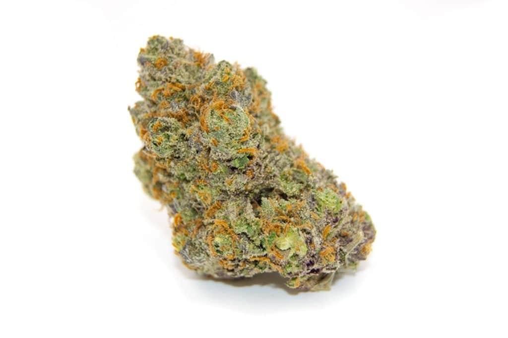 Gorilla Glue #4 Hybrid Cannabis Strain