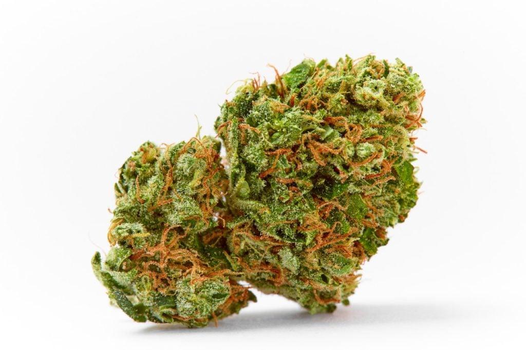 Green Crack Sativa Marijuana Strain