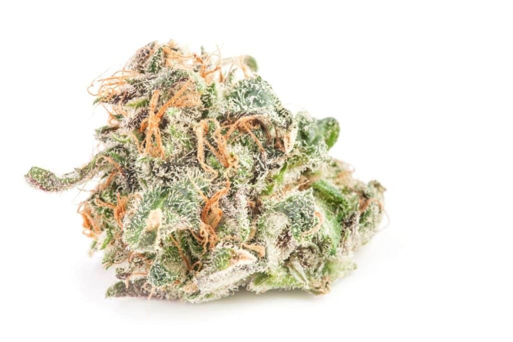 Super Silver Haze Sativa Marijuana Strain